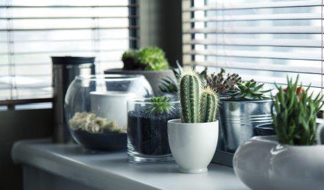 cacti-decoration-flora-37076