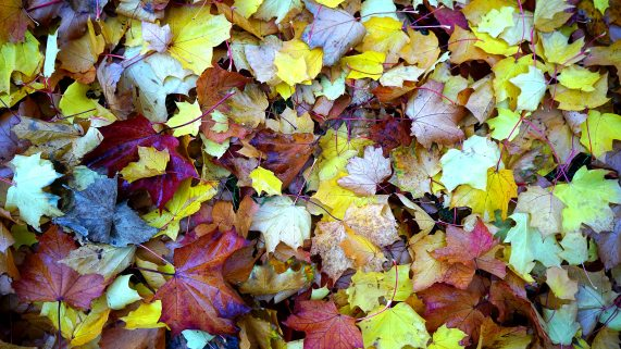abstract-autumn-autumn-leaves-213613